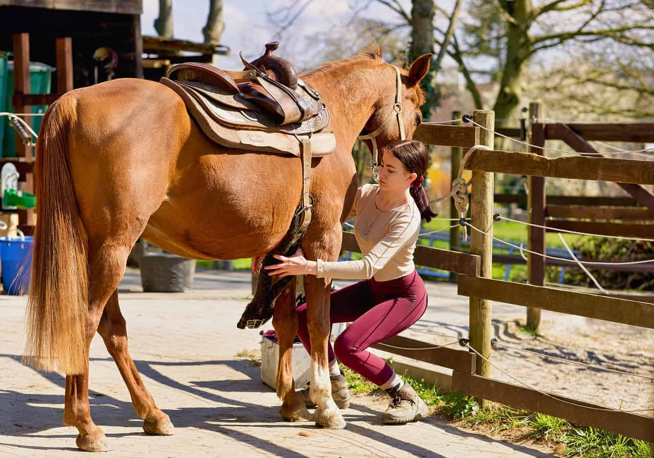 How to Put a Saddle on a Horse