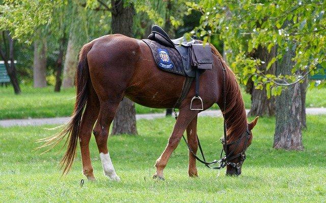 Abetta Saddles