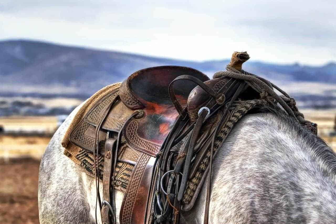 King Series Saddle Review