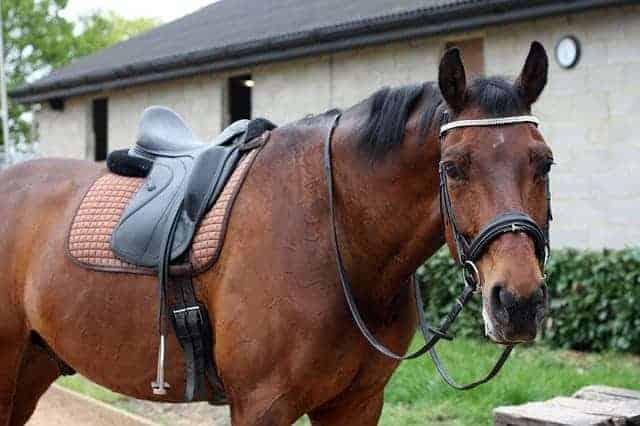 wintec saddle reviews