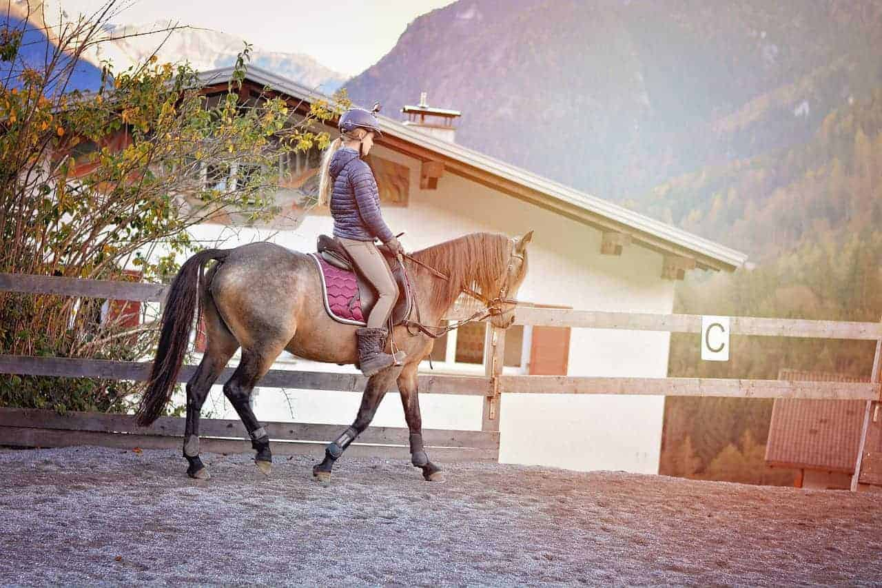 Dressage Saddles Reviews