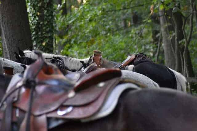 English Saddle Vs Western Saddle