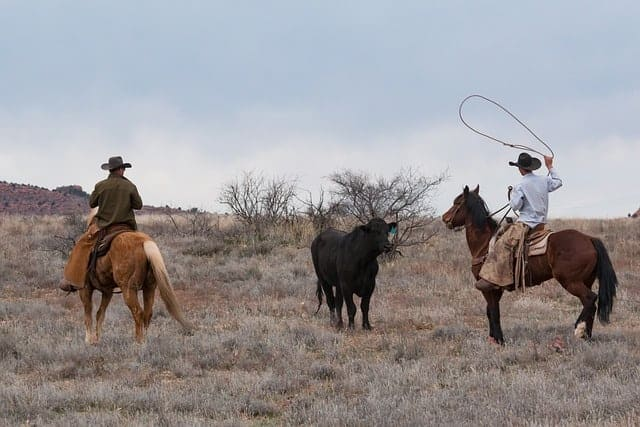 What are the Differences Between Roping and Barrel Saddles