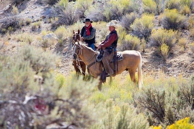 English Saddle Western Saddle