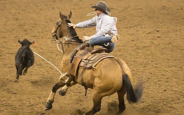 Roping and Barrel Saddles