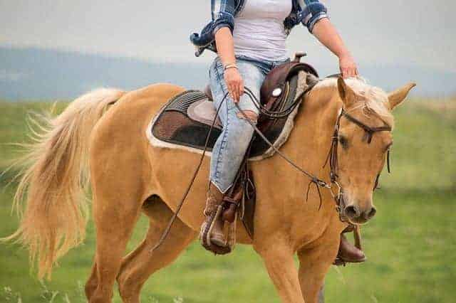 Wool Saddle Pad