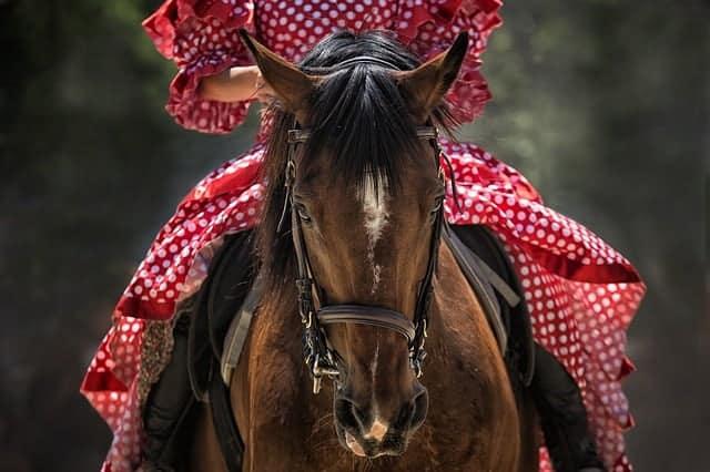 tough 1 saddle review