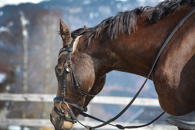 tough 1 saddle