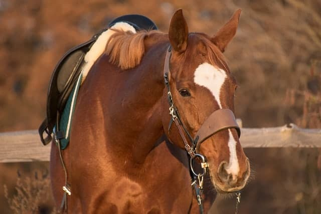 tough 1 saddles